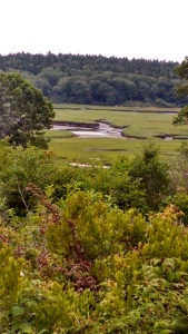 3.View of the Morse Tidal River in Phippsburg, Maine, from the real-life 1877 House. The house and its view inspired the home in Hidden Harbor where Katherine and her ex-husband, Barry, once lived—and where Barry now lives alone.